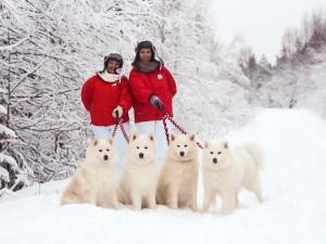 snow_dogs-5