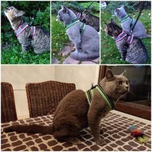 Näin hyvin istuu valjaat kissojenkin päälle! Kiitos kuvista Kia Järvinen.